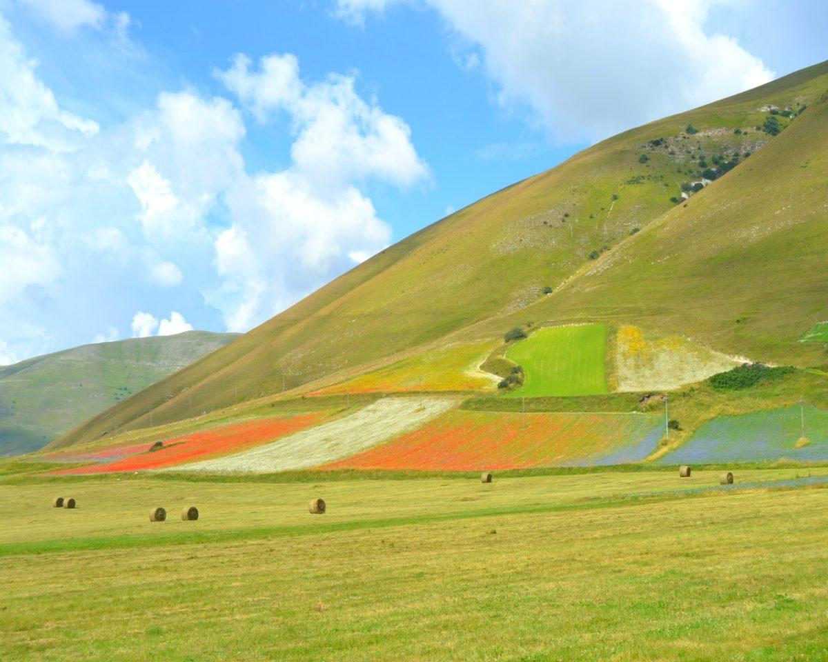 valle colorata di fiori di lenticchie di Castelluccio di Norcia