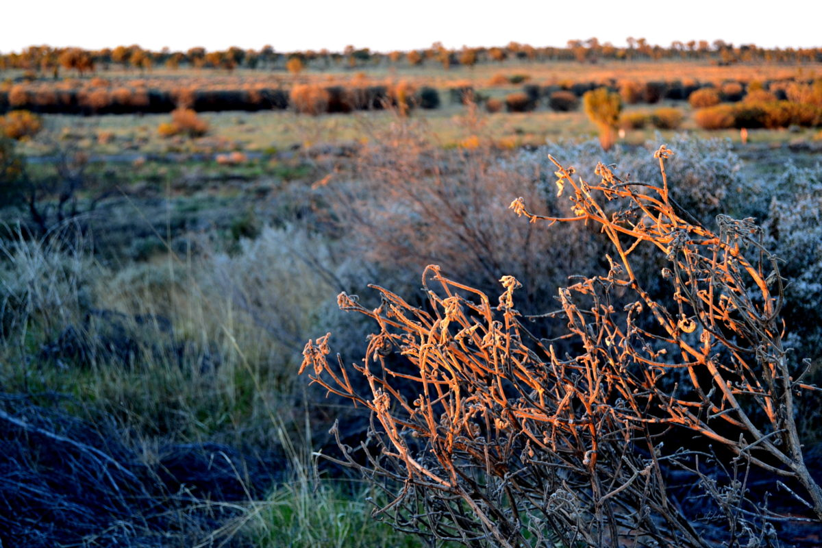 come arrivare Uluru Bush australiano australia