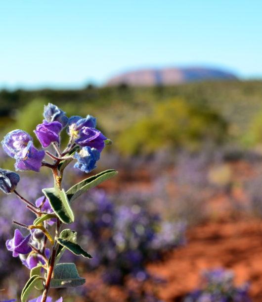 Uluru Australia classifica 20