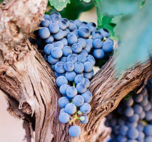 Dove dormire, mangiare e degustare ottimo vino in Costiera Amalfitana Amalfi meteo cucina Napoli vacanza Google mare spiaggia cibo viaggio