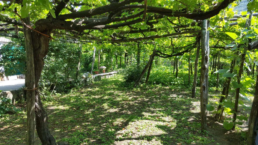 Dove dormire, mangiare e degustare ottimo vino in Costiera Amalfitana Amalfi meteo cucina Napoli vacanza Google mare spiaggia cibo viaggio viti vitigni vite